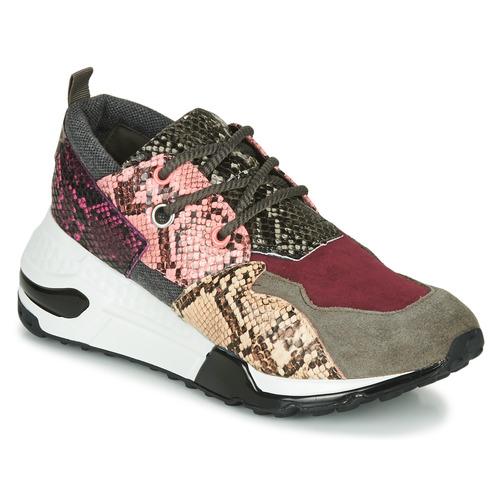 Shoes Women Low top trainers Steve Madden CLIFF Multicolour