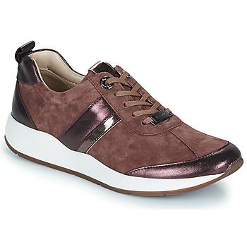 Shoes Women Low top trainers JB Martin KAP Powder