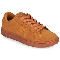 Shoes Men Low top trainers DC Shoes STRIKER Camel