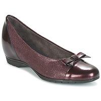 Shoes Women Flat shoes Pitillos 3614 BORDEAUX